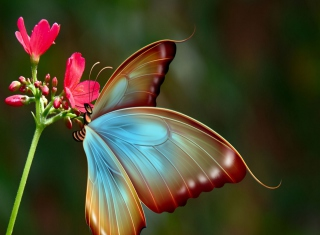 Free Big Butterfly Picture for Android, iPhone and iPad
