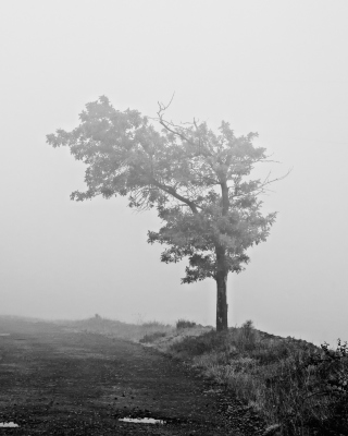 Lonely Tree Background for 360x640