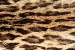 Animal Texture Wallpaper for Android, iPhone and iPad