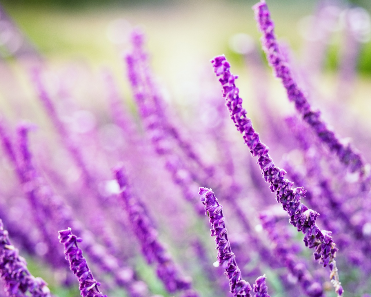 Screenshot №1 pro téma Macro Purple Flowers 1280x1024