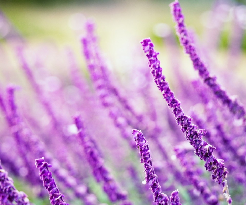 Screenshot №1 pro téma Macro Purple Flowers 960x800