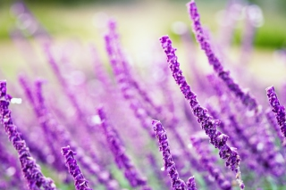 Macro Purple Flowers Wallpaper for Android, iPhone and iPad