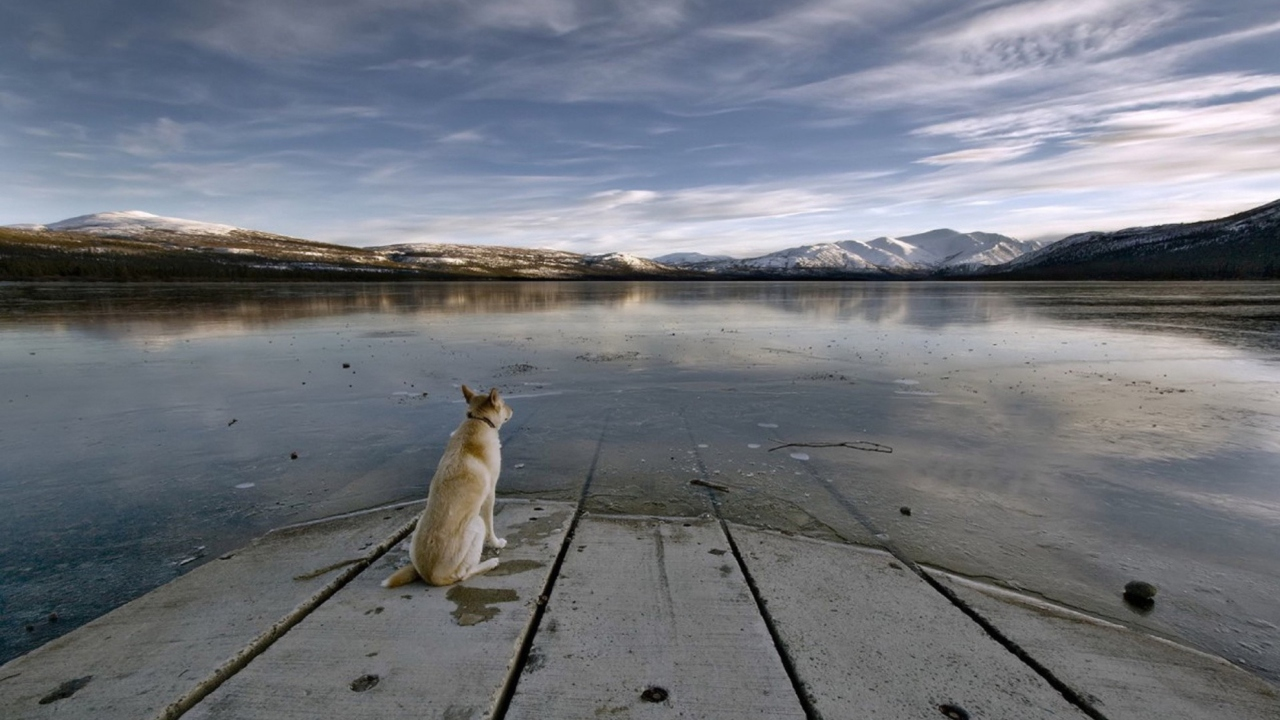Screenshot №1 pro téma Dog And Lake 1280x720