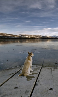 Screenshot №1 pro téma Dog And Lake 240x400