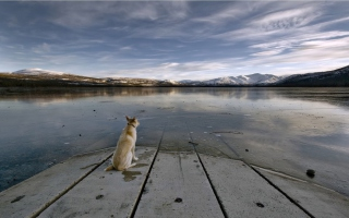 Kostenloses Dog And Lake Wallpaper für Desktop 1280x720 HDTV