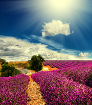 Free Lavender Picture for 768x1280