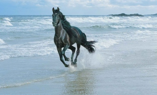 Black Horse On Sea Shore - Fondos de pantalla gratis