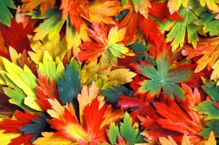 Обои Colorful Leaves для телефона и на рабочий стол Fullscreen Desktop 1280x1024