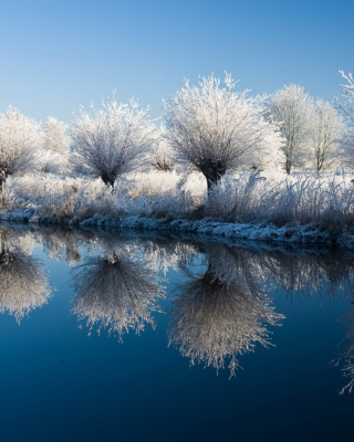 Winter Trees - Fondos de pantalla gratis para HTC Pure