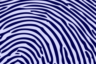 Zebra Pattern Picture for Android, iPhone and iPad