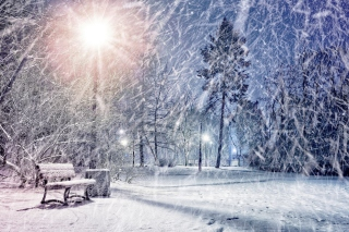 Winter Evening in Park - Fondos de pantalla gratis