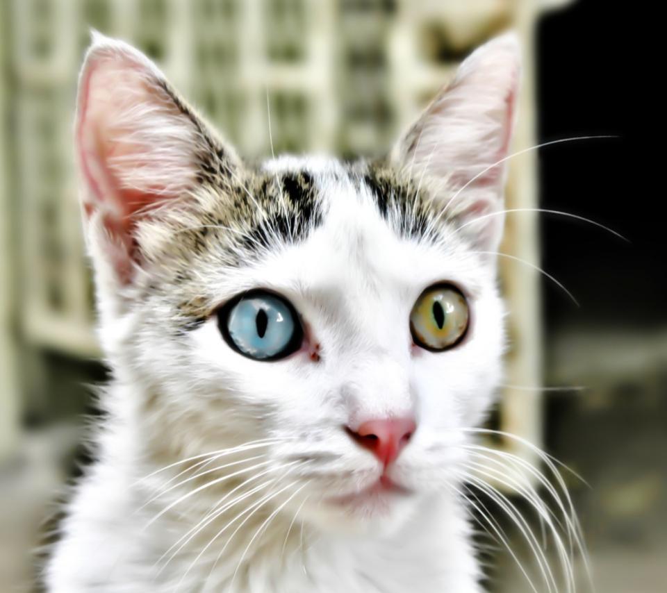Bipolar Kitty para Sony Ericsson XPERIA PLAY