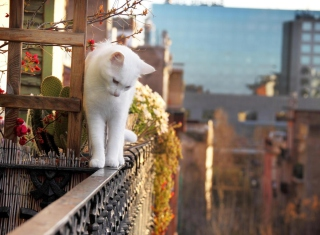 Kostenloses Cat On Balcony Wallpaper für 1280x720