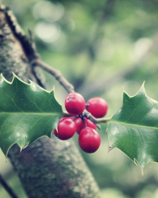 Free Red Berries On Tree Picture for HTC Pure