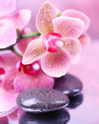 Orchid Spa Background for iPhone 6 Plus