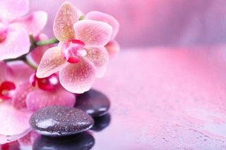 Orchid Spa Background for Android, iPhone and iPad