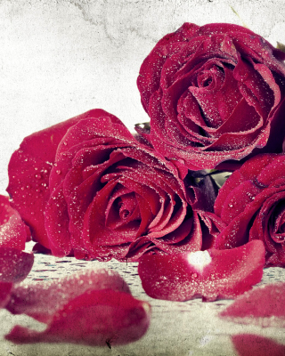 Free Roses Fresh Dew Picture for Nokia C1-01