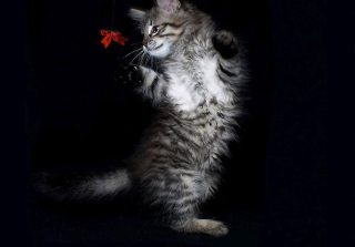Cat Dancing Background for Android, iPhone and iPad