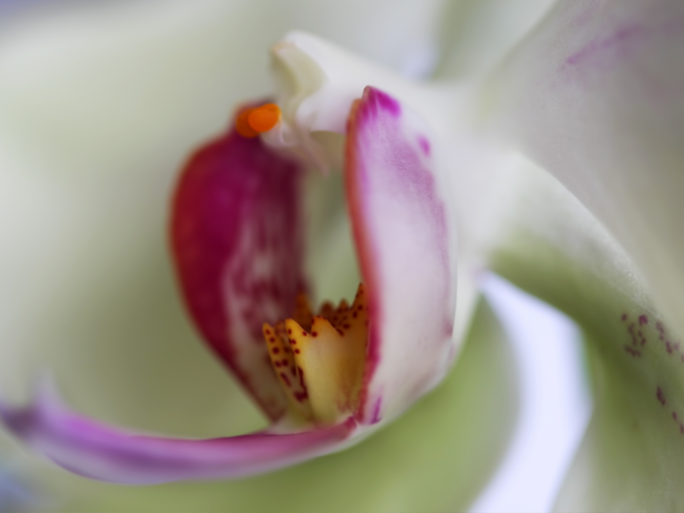 Orchid wallpaper 1400x1050