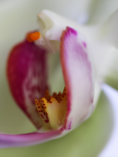 Orchid wallpaper 240x320