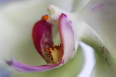 Orchid wallpaper 480x320