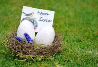 Happy Easter Nest Wallpaper for Android, iPhone and iPad