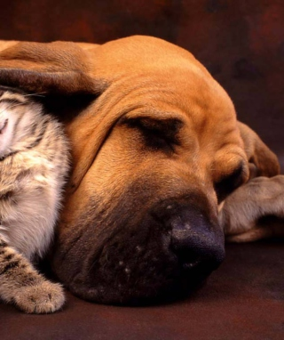 Free Cat and Dog Are Te Best Friend Picture for iPhone 6 Plus