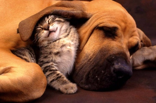 Kostenloses Cat and Dog Are Te Best Friend Wallpaper für Android, iPhone und iPad