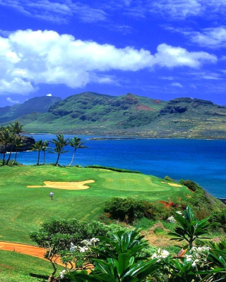 Paradise Golf Field Background for Nokia Asha 306