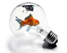 Screenshot №1 pro téma Fish In Light Bulb 220x176