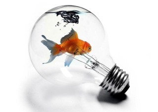 Картинка Fish In Light Bulb для телефона и на рабочий стол