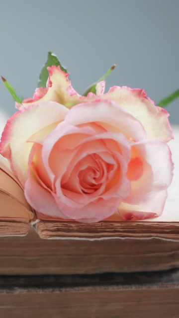 Pink Rose On Vintage Book