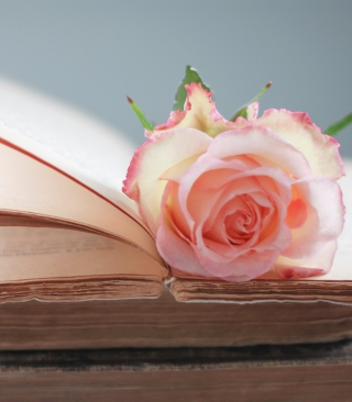 Pink Rose On Vintage Book Background for HTC Titan