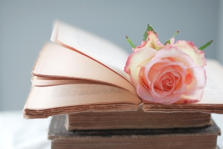 Pink Rose On Vintage Book Background for Android, iPhone and iPad