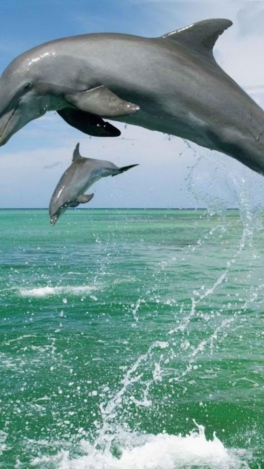 телефон картинка дельфин на