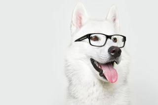 Hipster Husky Background for Android, iPhone and iPad