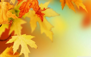 Free Yellow Autumn Leaves Picture for Android, iPhone and iPad
