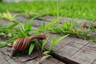 Snail On Green Wallpaper for Android, iPhone and iPad