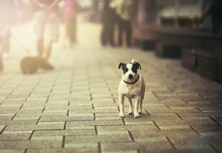 Dog On City Street - Fondos de pantalla gratis para Nokia Asha 302