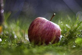 Apple In The Grass - Obrázkek zdarma