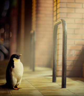 Penguin Wallpaper for Nokia Asha 306