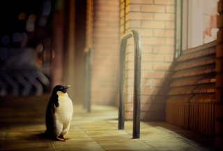 Penguin Wallpaper for Android, iPhone and iPad