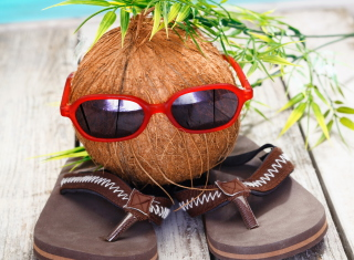 Funny Coconut Background for 1080x960