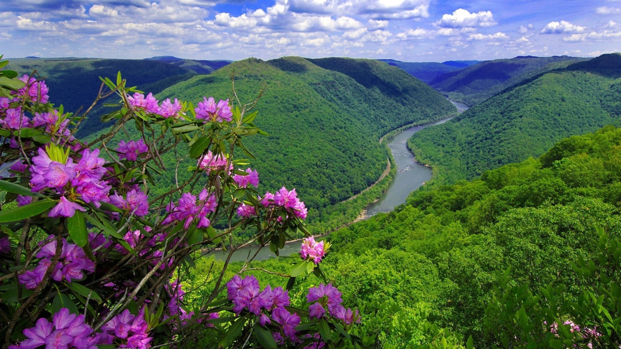 Purple Flowers And Green Hills