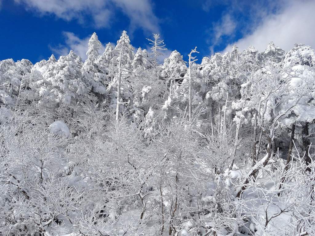 Screenshot №1 pro téma Snowy Winter Forest 1024x768
