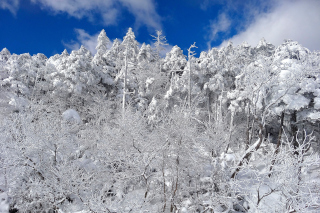Free Snowy Winter Forest Picture for 960x854