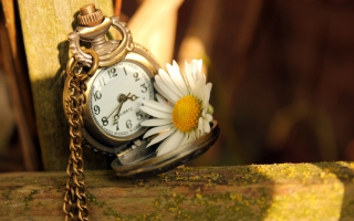 Kostenloses Vintage Watch And Daisy Wallpaper für Android, iPhone und iPad
