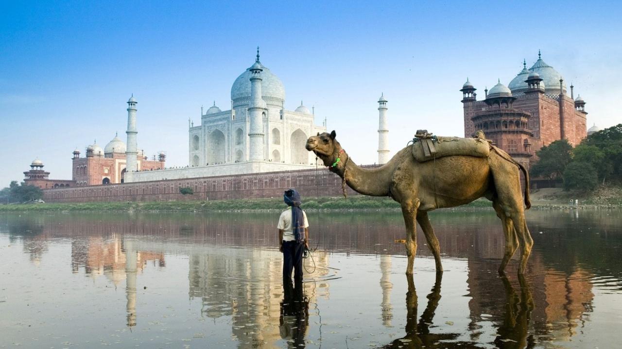 Camel Near Taj Mahal