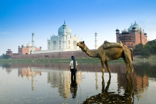 Camel Near Taj Mahal sfondi gratuiti per cellulari Android, iPhone, iPad e desktop