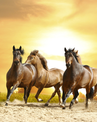 Horse Gait Gallop Background for Nokia C1-01